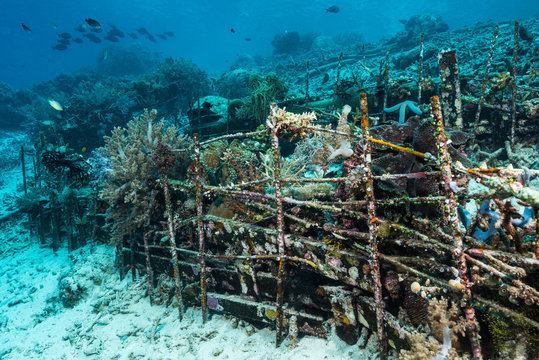 man-made artificial reef with metal struture and concrete to help marine life to recover destroyed area