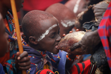 A Maasai boy bites a bull's heart during an initiation into an age group ceremony near the town of Bisil, Kajiado county