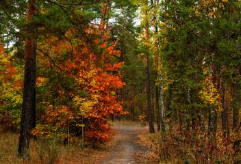 walk in the autumn forest. autumn colors. melancholy. autumn mood,