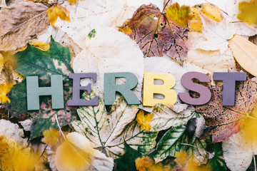 Antique autumnal background with leaves