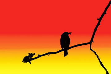 illustration of a silhouetted bird on a tree branch