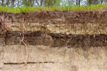 Fototapeta Stratigraphic section of soil with layers and grass roots. Russia, Rostov-on-Don region obraz