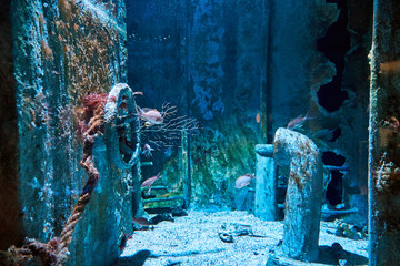Underwater photography with sea fish, shipwreck and reef