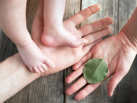 Parent's hands holding newborn legs. Baby's feet in parent's hands. Daddy holding his newborn baby's feet. Father's hand holding baby's legs. Human hand holding green leaf. Ecology background