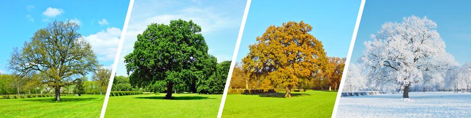 Foto op Aluminium Lime groen Vier Jahreszeiten - Baum Panorama