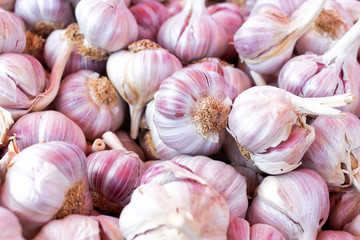 Background of pink garlic bulbs.