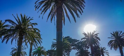Palm tree in the shining sun in Australia