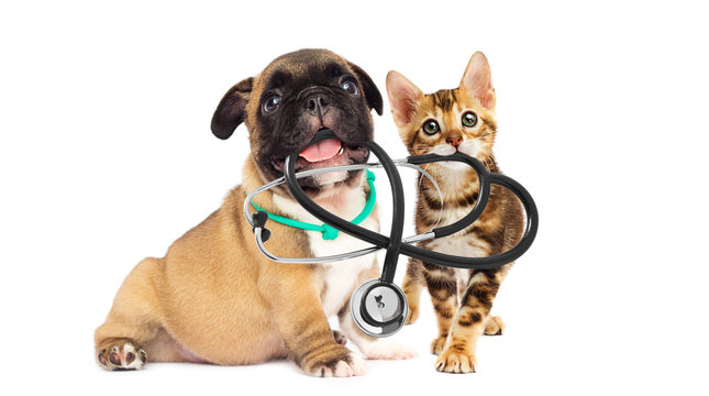 vet puppy and kitten