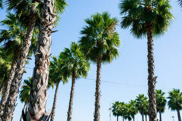 palm trees against blue sky