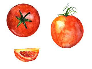 watercolor tomato.hand drawn illustration isolated on white background
