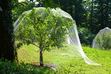 Obstanbau mit Fraßschutz-Netz um die Obstbäume