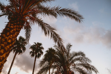 Palm trees against the light