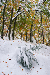 Fototapete - Autumn landscape with the first snow in the mountains