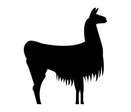 Black llama silhouette