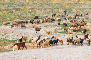 Islamic Republic of Iran.  Fars Province, Rudbal. Rural landscape. Herd of goats.
