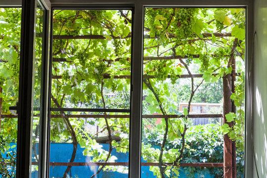 view of shady vineyard on yard through home window