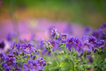 purple flowers on a colourful background