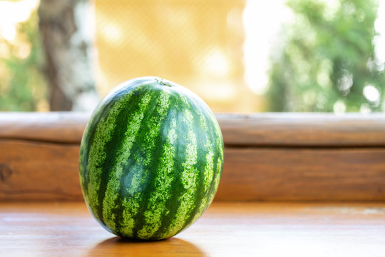Whole green organic ripe watermelon on wooden shelf outdoors. Fresh tasty berry ready to be cutted and served. Healthy sweet eating