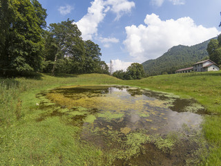 pond with stagnant water near trees in the mountains