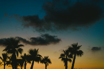 Backlit palm trees at sunset in a beach resort town in summer.