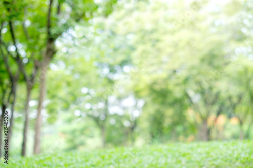 Blurred Spring And Summer Nature Outdoor Background Blur