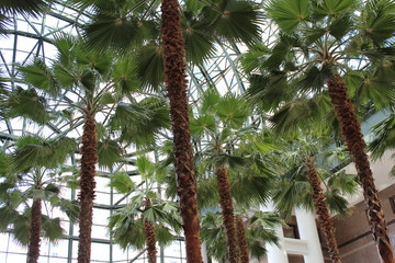 Palm Tree's Inside Brookfield Place