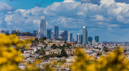 San Francisco skyline panorama with blooming flowers in the foreground