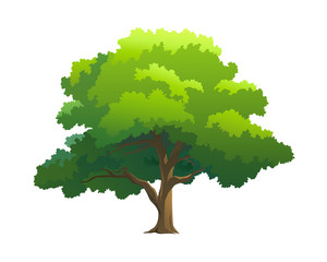 illustration tree for cartoon