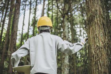 木の点検をする作業着の男性