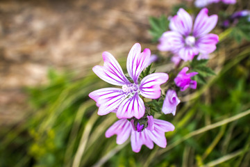 macro blossom green meadow summer petal nature sunset on flowers sunset purple blue flora floral color close-up
