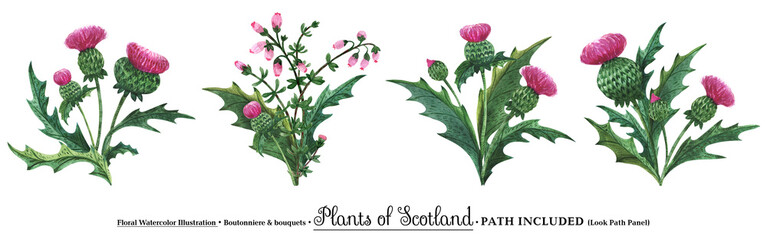 Scottish wild plants boutonniere, thistle bouquet Wall mural