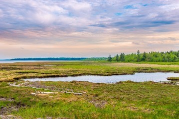 Wall Mural - View at the lagoon in National Park Kouchibouguac - Canada