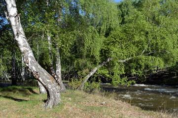Mountain river Bolshoy Yaloman in the Altai Republic