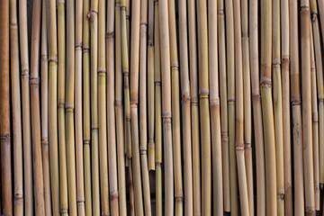old reeds background