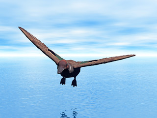 Ente im Flug