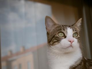 Gato (Macho) 2