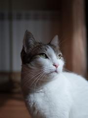 Gato (Hembra)