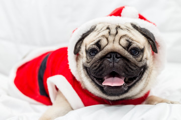 Cute pug dog breed wearing in red santa dress and lying on white bed in bedroom smile with funny face and feeling so happiness after wake up