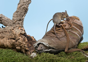 Shoe for mice