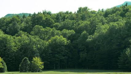 Mount Washington, New Hampshire. Trees