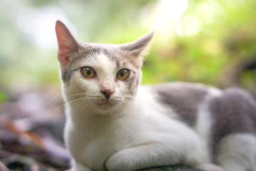 Cat pose portrait in forrest wild jungle