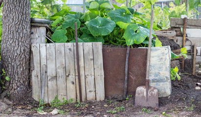 compost heap with pumpkin plants