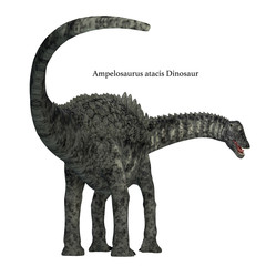 Ampelosaurus Dinosaur Tail - Ampelosaurus was a herbivorous sauropod dinosaur that lived in Europe during the Cretaceous Period.