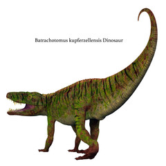 Batrachotomus Dinosaur Tail - Batrachotomus was a carnivorous archosaur dinosaur that lived in Germany during the Triassic Period.
