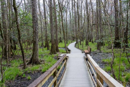 Boardwalk through the Woods