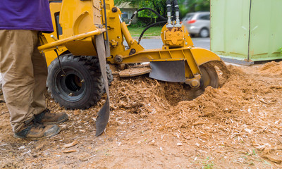 stump grinder in tree cut nature is destroyed action