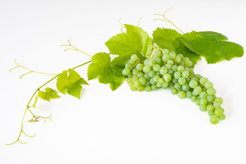 Bunch of fresh picked champagne grapes, and a grape vine and leaves, on a white background