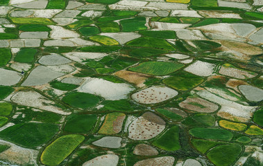 Wall Murals Olive Aerial view landscape, Green rice field pattern in rural area