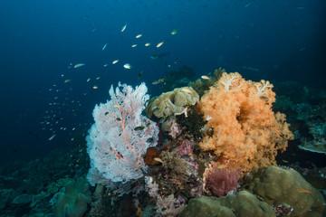 Tropical Underwater Raja Ampat