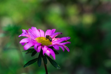 pink flower with a bee inside on a green background